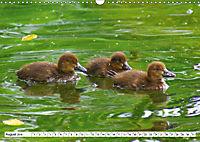 Niedliche Entenküken (Wandkalender 2019 DIN A3 quer) - Produktdetailbild 8
