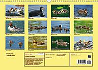 Niedliche Entenküken (Wandkalender 2019 DIN A3 quer) - Produktdetailbild 13