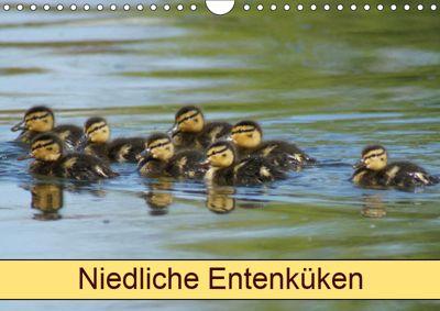 Niedliche Entenküken (Wandkalender 2019 DIN A4 quer), kattobello