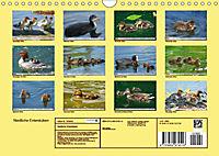 Niedliche Entenküken (Wandkalender 2019 DIN A4 quer) - Produktdetailbild 13