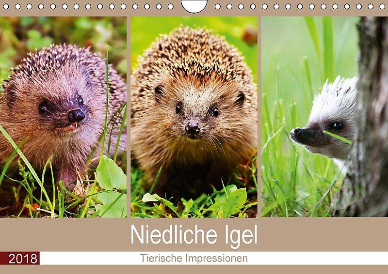 Niedliche Igel 2018 Tierische Impressionen Wandkalender 2018 Din A4