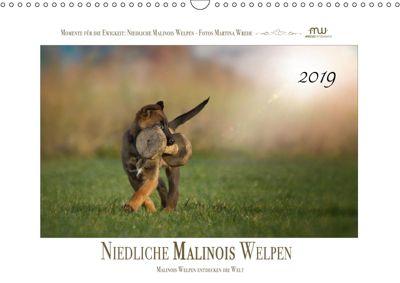 Niedliche Malinois Welpen (Wandkalender 2019 DIN A3 quer), Martina Wrede