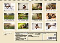 Niedliche Malinois Welpen (Wandkalender 2019 DIN A3 quer) - Produktdetailbild 13