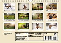 Niedliche Malinois Welpen (Wandkalender 2019 DIN A4 quer) - Produktdetailbild 11