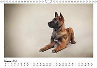 Niedliche Malinois Welpen (Wandkalender 2019 DIN A4 quer) - Produktdetailbild 9