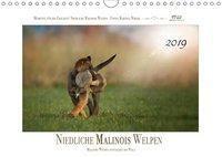 Niedliche Malinois Welpen (Wandkalender 2019 DIN A4 quer), Martina Wrede