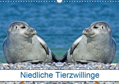 Niedliche Tierzwillinge (Wandkalender 2019 DIN A3 quer), Kattobello