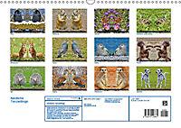 Niedliche Tierzwillinge (Wandkalender 2019 DIN A3 quer) - Produktdetailbild 13