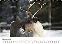 Nordische Szenerien (Wandkalender 2019 DIN A3 quer) - Produktdetailbild 2