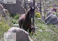 Nordportugal - Heimat der letzten wilden Pferde (Wandkalender 2019 DIN A3 quer) - Produktdetailbild 3