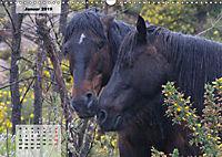 Nordportugal - Heimat der letzten wilden Pferde (Wandkalender 2019 DIN A3 quer) - Produktdetailbild 1