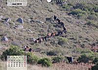 Nordportugal - Heimat der letzten wilden Pferde (Wandkalender 2019 DIN A3 quer) - Produktdetailbild 6