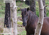 Nordportugal - Heimat der letzten wilden Pferde (Wandkalender 2019 DIN A3 quer) - Produktdetailbild 10