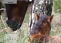 Nordportugal - Heimat der letzten wilden Pferde (Wandkalender 2019 DIN A3 quer) - Produktdetailbild 7