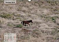 Nordportugal - Heimat der letzten wilden Pferde (Wandkalender 2019 DIN A3 quer) - Produktdetailbild 12