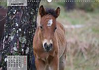 Nordportugal - Heimat der letzten wilden Pferde (Wandkalender 2019 DIN A3 quer) - Produktdetailbild 8