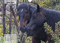 Nordportugal - Heimat der letzten wilden Pferde (Wandkalender 2019 DIN A4 quer) - Produktdetailbild 1
