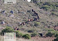 Nordportugal - Heimat der letzten wilden Pferde (Wandkalender 2019 DIN A4 quer) - Produktdetailbild 6