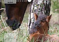 Nordportugal - Heimat der letzten wilden Pferde (Wandkalender 2019 DIN A4 quer) - Produktdetailbild 7
