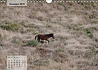 Nordportugal - Heimat der letzten wilden Pferde (Wandkalender 2019 DIN A4 quer) - Produktdetailbild 12