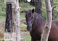 Nordportugal - Heimat der letzten wilden Pferde (Wandkalender 2019 DIN A4 quer) - Produktdetailbild 10