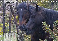 Nordportugal - Heimat der letzten wilden Pferde (Tischkalender 2019 DIN A5 quer) - Produktdetailbild 1