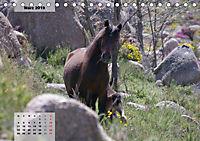 Nordportugal - Heimat der letzten wilden Pferde (Tischkalender 2019 DIN A5 quer) - Produktdetailbild 3