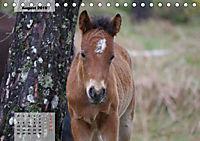 Nordportugal - Heimat der letzten wilden Pferde (Tischkalender 2019 DIN A5 quer) - Produktdetailbild 8