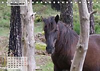 Nordportugal - Heimat der letzten wilden Pferde (Tischkalender 2019 DIN A5 quer) - Produktdetailbild 10
