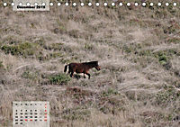Nordportugal - Heimat der letzten wilden Pferde (Tischkalender 2019 DIN A5 quer) - Produktdetailbild 12