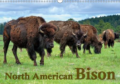 North American Bison (Wall Calendar 2019 DIN A3 Landscape), Dieter-M. Wilczek