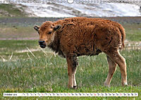North American Bison (Wall Calendar 2019 DIN A3 Landscape) - Produktdetailbild 10