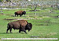 North American Bison (Wall Calendar 2019 DIN A3 Landscape) - Produktdetailbild 1