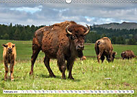 North American Bison (Wall Calendar 2019 DIN A3 Landscape) - Produktdetailbild 2