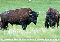 North American Bison (Wall Calendar 2019 DIN A3 Landscape) - Produktdetailbild 4