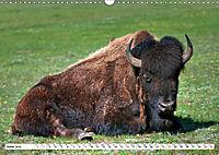 North American Bison (Wall Calendar 2019 DIN A3 Landscape) - Produktdetailbild 6