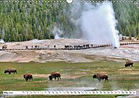 North American Bison (Wall Calendar 2019 DIN A3 Landscape) - Produktdetailbild 5