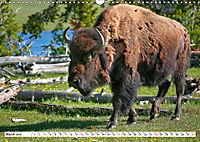 North American Bison (Wall Calendar 2019 DIN A3 Landscape) - Produktdetailbild 3