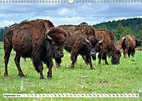North American Bison (Wall Calendar 2019 DIN A3 Landscape) - Produktdetailbild 9