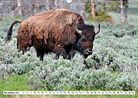 North American Bison (Wall Calendar 2019 DIN A3 Landscape) - Produktdetailbild 11