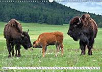 North American Bison (Wall Calendar 2019 DIN A3 Landscape) - Produktdetailbild 7