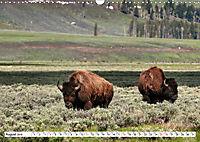 North American Bison (Wall Calendar 2019 DIN A3 Landscape) - Produktdetailbild 8