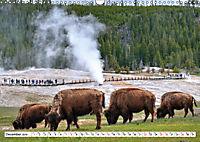 North American Bison (Wall Calendar 2019 DIN A3 Landscape) - Produktdetailbild 12