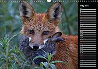 North America's Wildlife (Wall Calendar 2019 DIN A3 Landscape) - Produktdetailbild 5