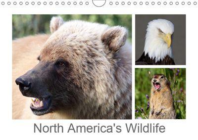 North America's Wildlife (Wall Calendar 2019 DIN A4 Landscape), Carsten Braue