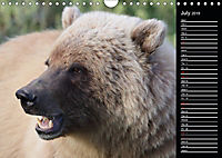 North America's Wildlife (Wall Calendar 2019 DIN A4 Landscape) - Produktdetailbild 7
