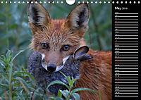 North America's Wildlife (Wall Calendar 2019 DIN A4 Landscape) - Produktdetailbild 5