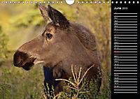 North America's Wildlife (Wall Calendar 2019 DIN A4 Landscape) - Produktdetailbild 6