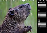 North America's Wildlife (Wall Calendar 2019 DIN A4 Landscape) - Produktdetailbild 2