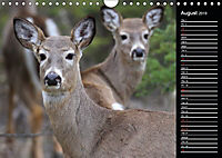 North America's Wildlife (Wall Calendar 2019 DIN A4 Landscape) - Produktdetailbild 8